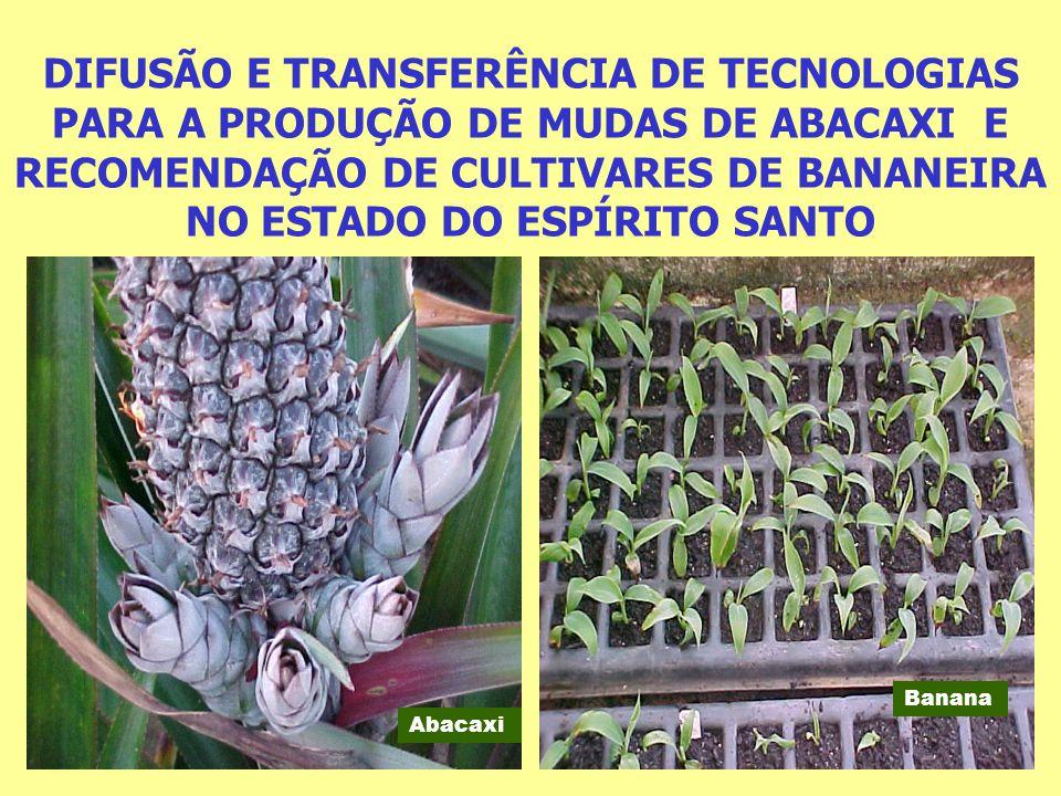 DIFUSÃO E TRANSFERÊNCIA DE TECNOLOGIAS PARA A PRODUÇÃO DE MUDAS DE ABACAXI E RECOMENDAÇÃO DE CULTIVARES DE BANANEIRA NO ESTADO DO ESPÍRITO SANTO
