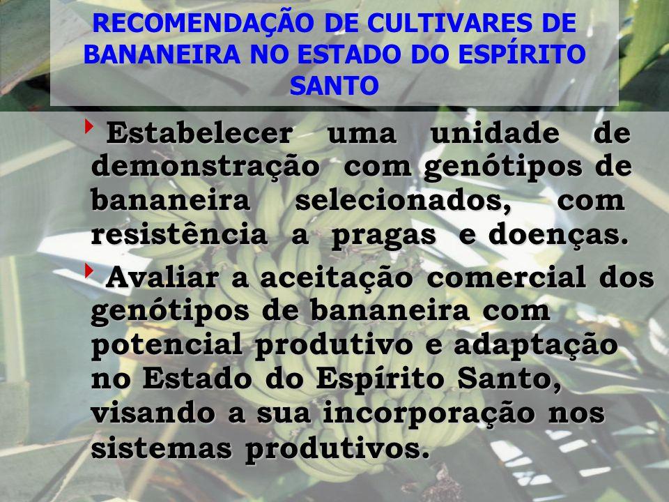 RECOMENDAÇÃO DE CULTIVARES DE BANANEIRA NO ESTADO DO ESPÍRITO SANTO
