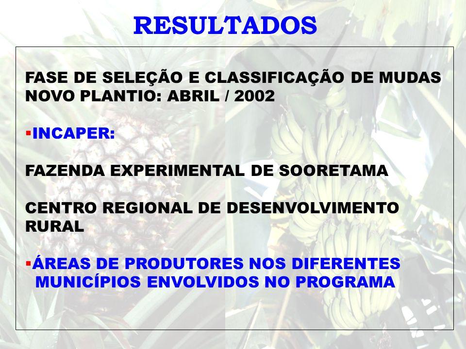 RESULTADOS FASE DE SELEÇÃO E CLASSIFICAÇÃO DE MUDAS