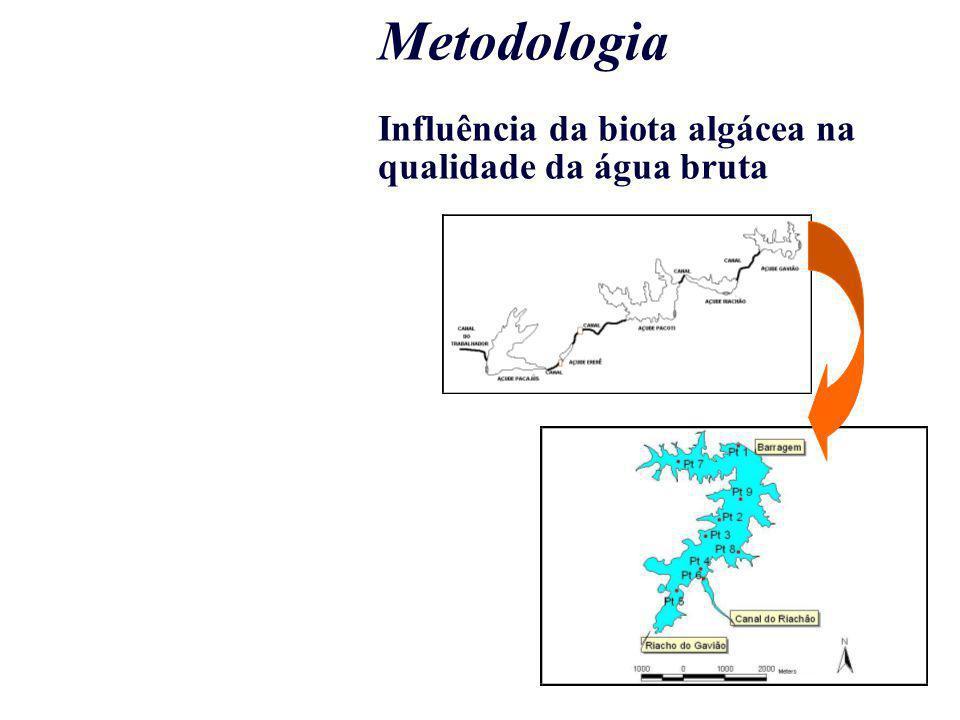 Metodologia Influência da biota algácea na qualidade da água bruta