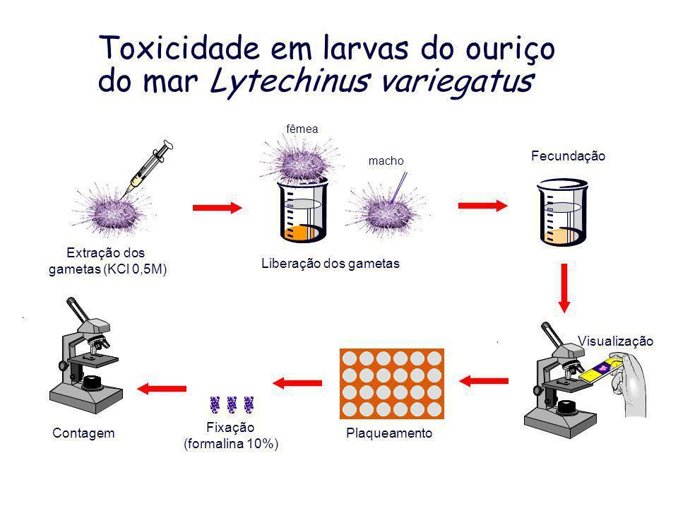 Toxicidade em larvas do ouriço do mar Lytechinus variegatus