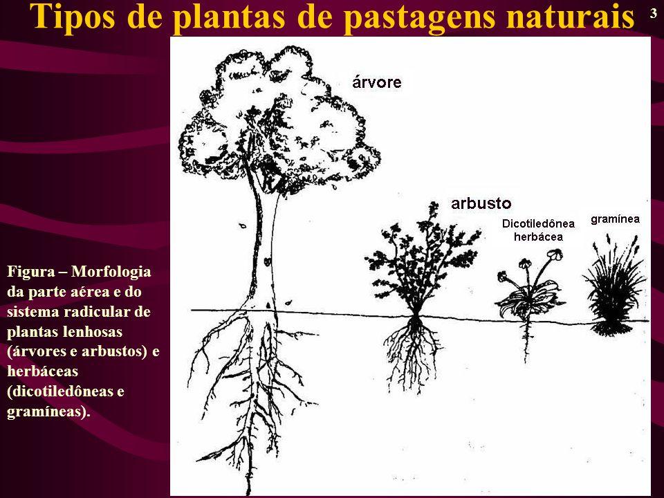 Tipos de plantas de pastagens naturais