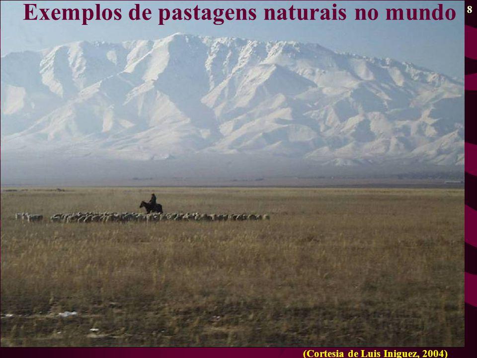 Exemplos de pastagens naturais no mundo