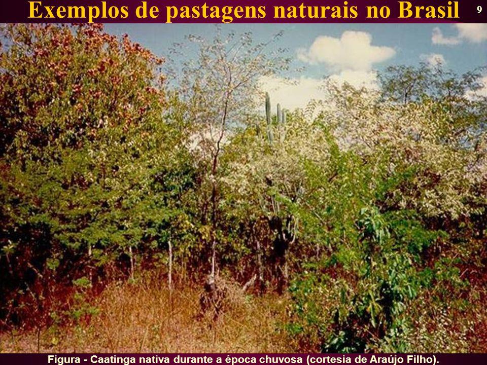 Exemplos de pastagens naturais no Brasil