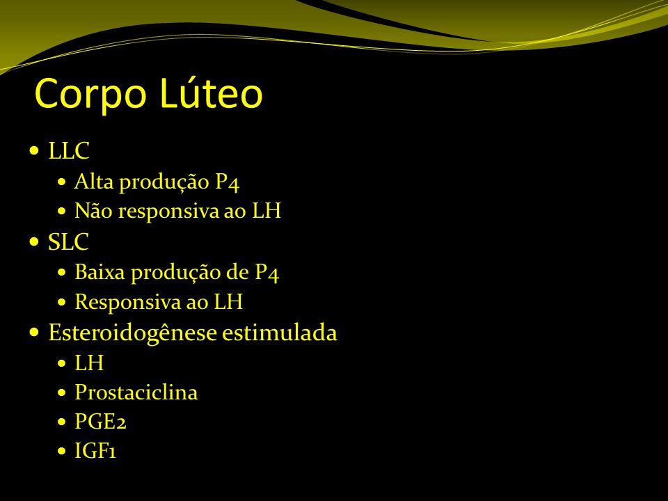 Corpo Lúteo LLC SLC Esteroidogênese estimulada Alta produção P4