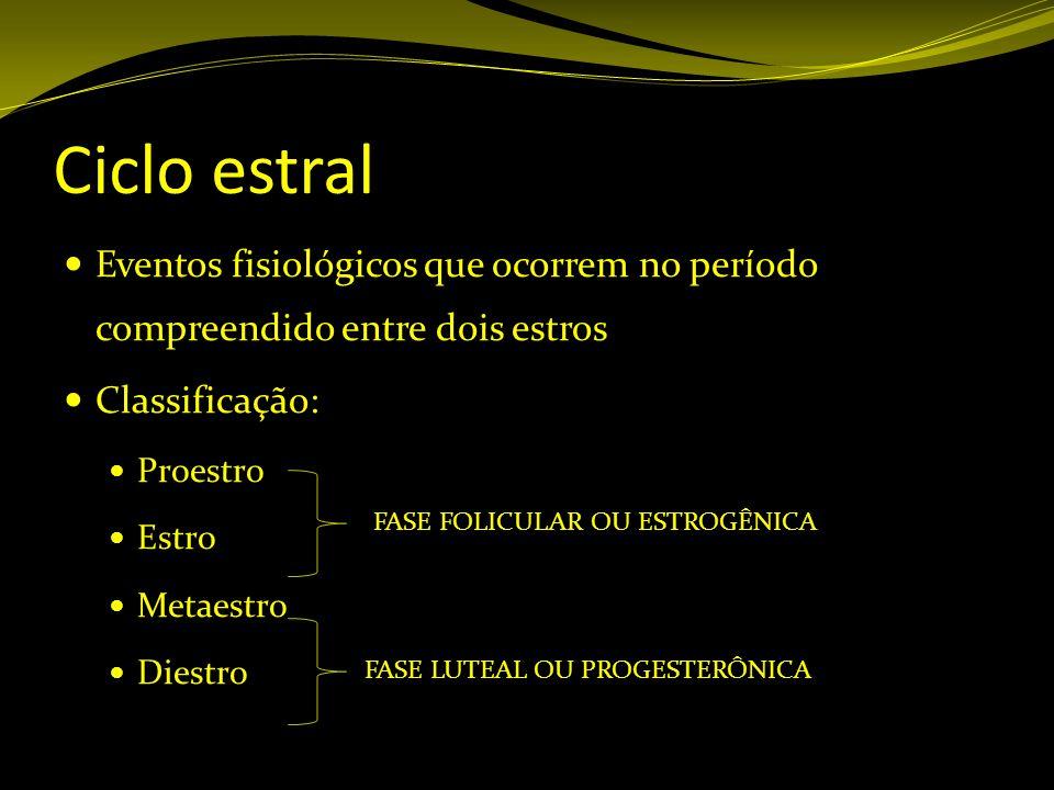Ciclo estral Eventos fisiológicos que ocorrem no período compreendido entre dois estros. Classificação: