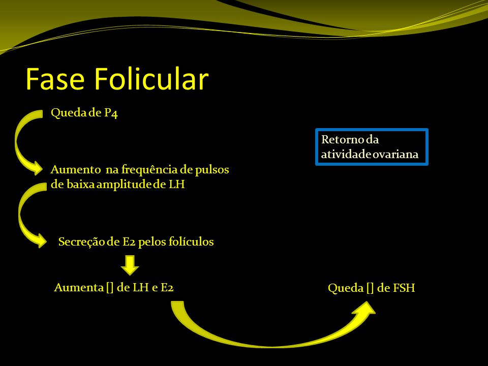 Fase Folicular Queda de P4 Retorno da atividade ovariana