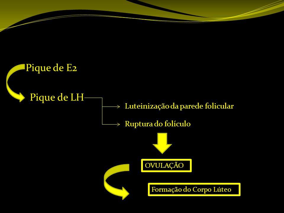 Pique de E2 Pique de LH Luteinização da parede folicular
