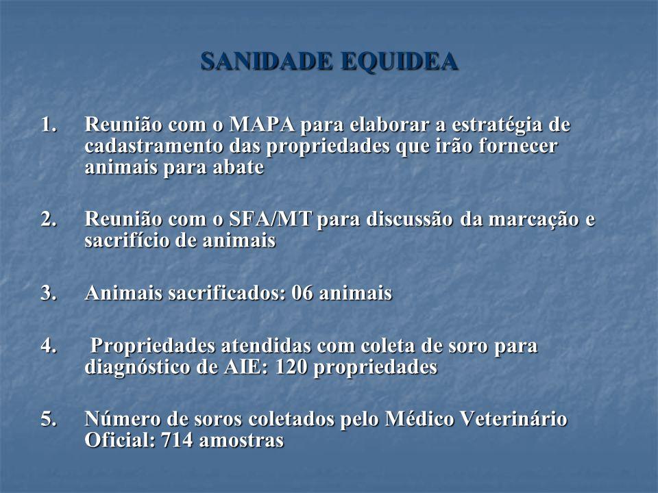 SANIDADE EQUIDEA Reunião com o MAPA para elaborar a estratégia de cadastramento das propriedades que irão fornecer animais para abate.