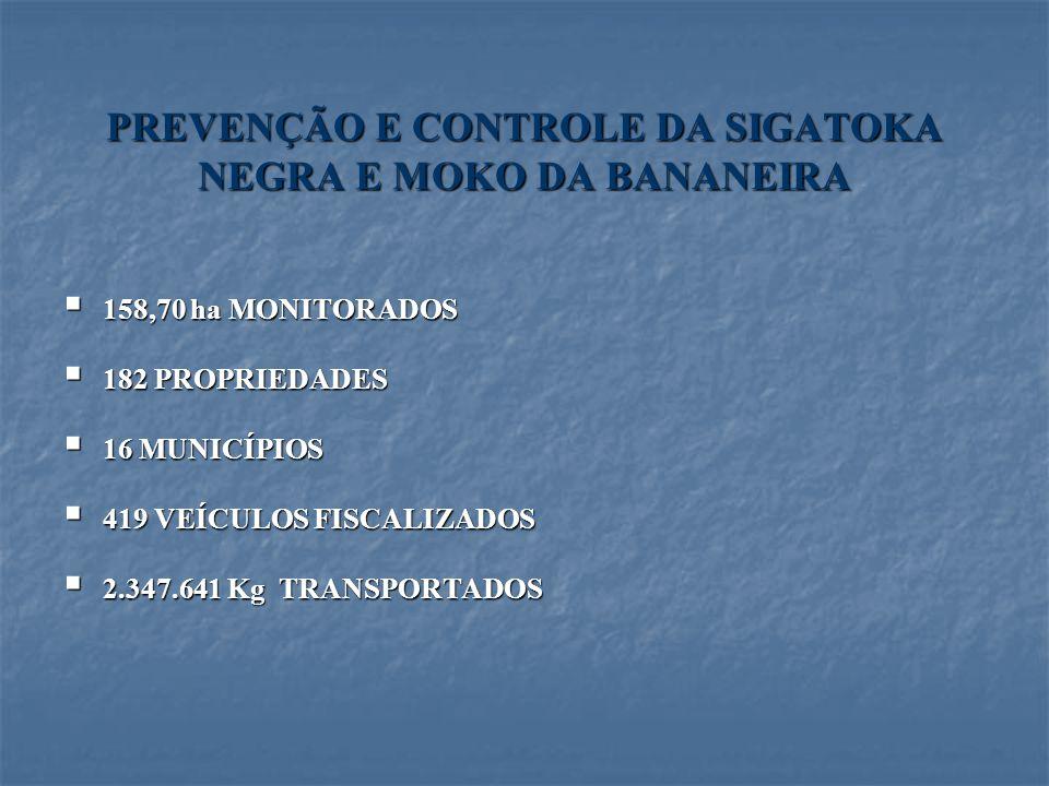 PREVENÇÃO E CONTROLE DA SIGATOKA NEGRA E MOKO DA BANANEIRA