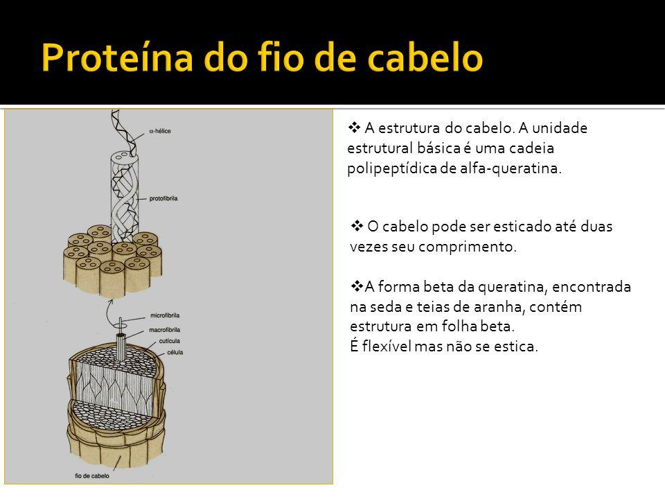Proteína do fio de cabelo