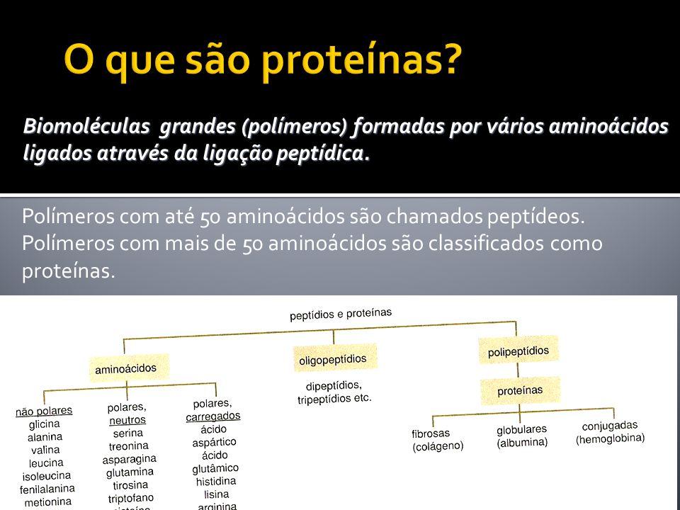 O que são proteínas Biomoléculas grandes (polímeros) formadas por vários aminoácidos ligados através da ligação peptídica.