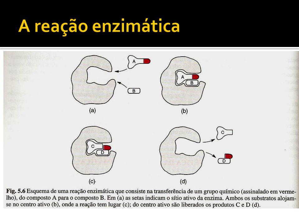 A reação enzimática
