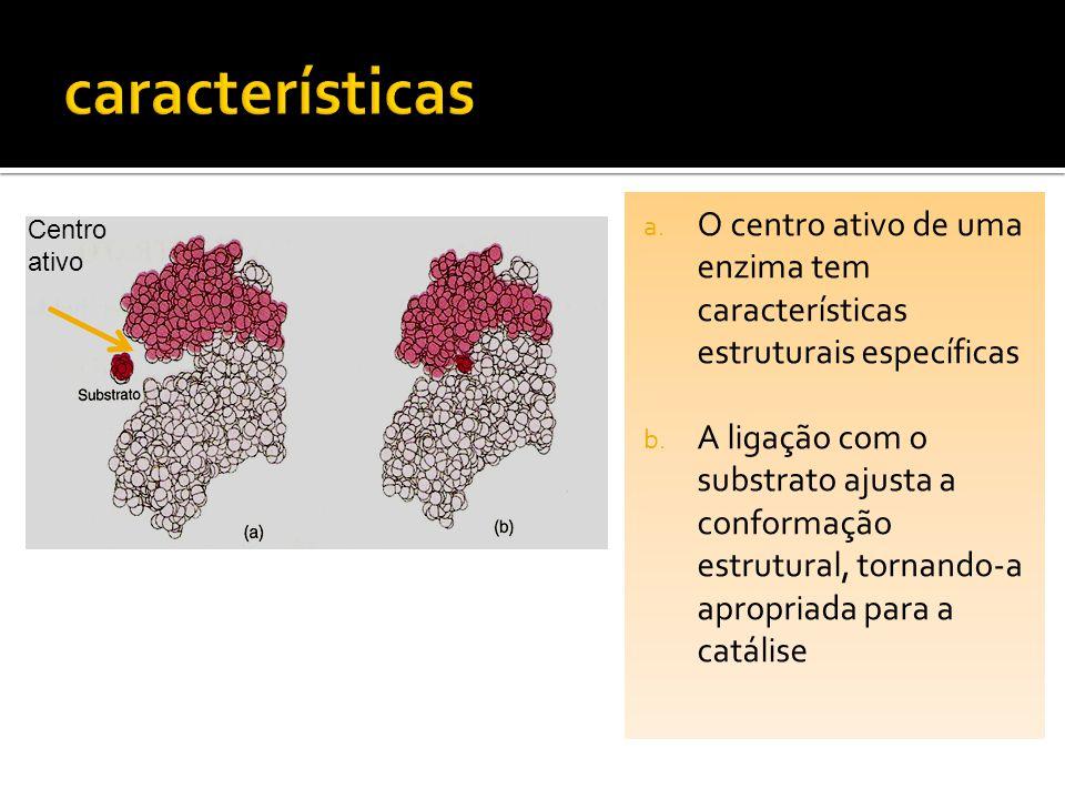 características O centro ativo de uma enzima tem características estruturais específicas.