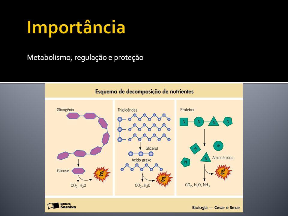 Importância Metabolismo, regulação, proteçmão
