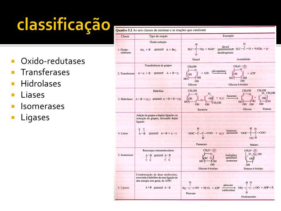 classificação Oxido-redutases Transferases Hidrolases Liases