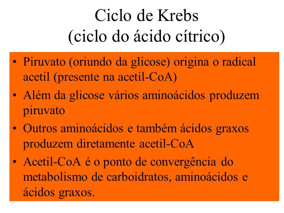 Ciclo de Krebs (ciclo do ácido cítrico)