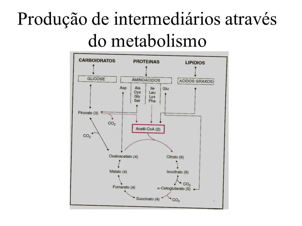 Produção de intermediários através do metabolismo
