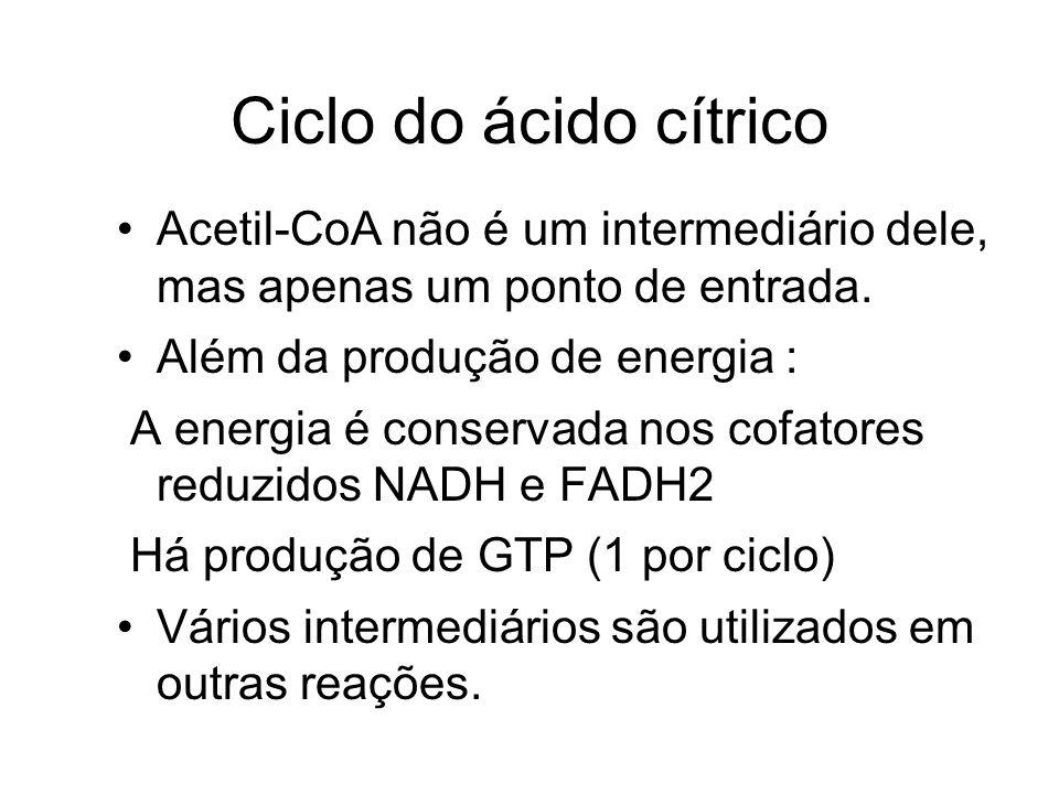 Ciclo do ácido cítrico Acetil-CoA não é um intermediário dele, mas apenas um ponto de entrada. Além da produção de energia :