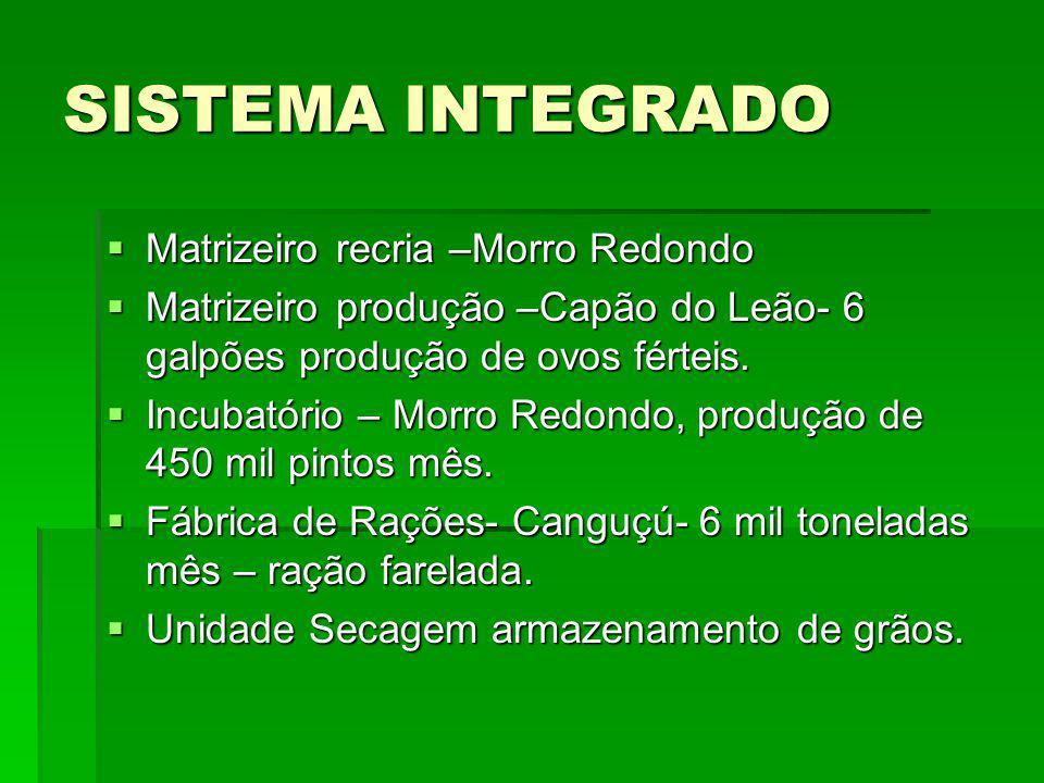 SISTEMA INTEGRADO Matrizeiro recria –Morro Redondo
