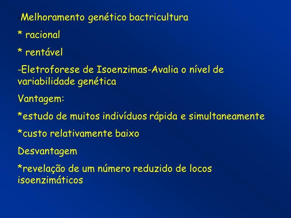 -Melhoramento genético bactricultura