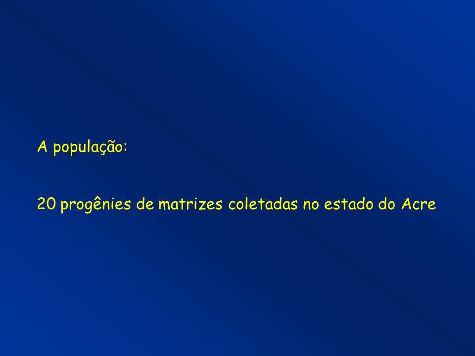 A população: 20 progênies de matrizes coletadas no estado do Acre