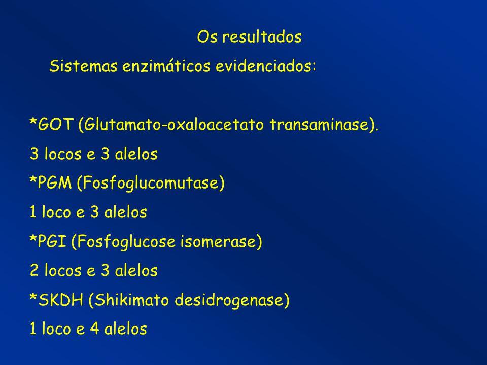 Os resultados Sistemas enzimáticos evidenciados: *GOT (Glutamato-oxaloacetato transaminase). 3 locos e 3 alelos.
