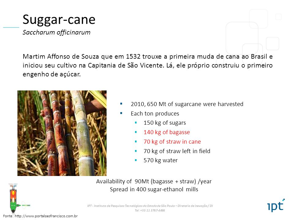 Suggar-cane Saccharum officinarum