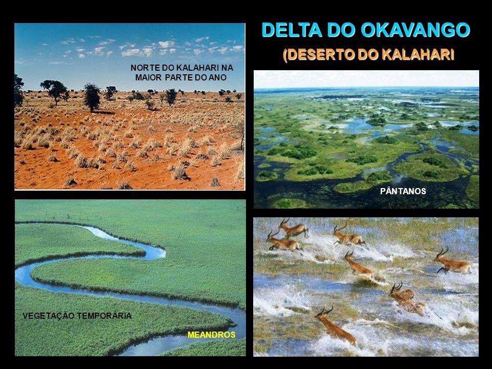 DELTA DO OKAVANGO (DESERTO DO KALAHARI