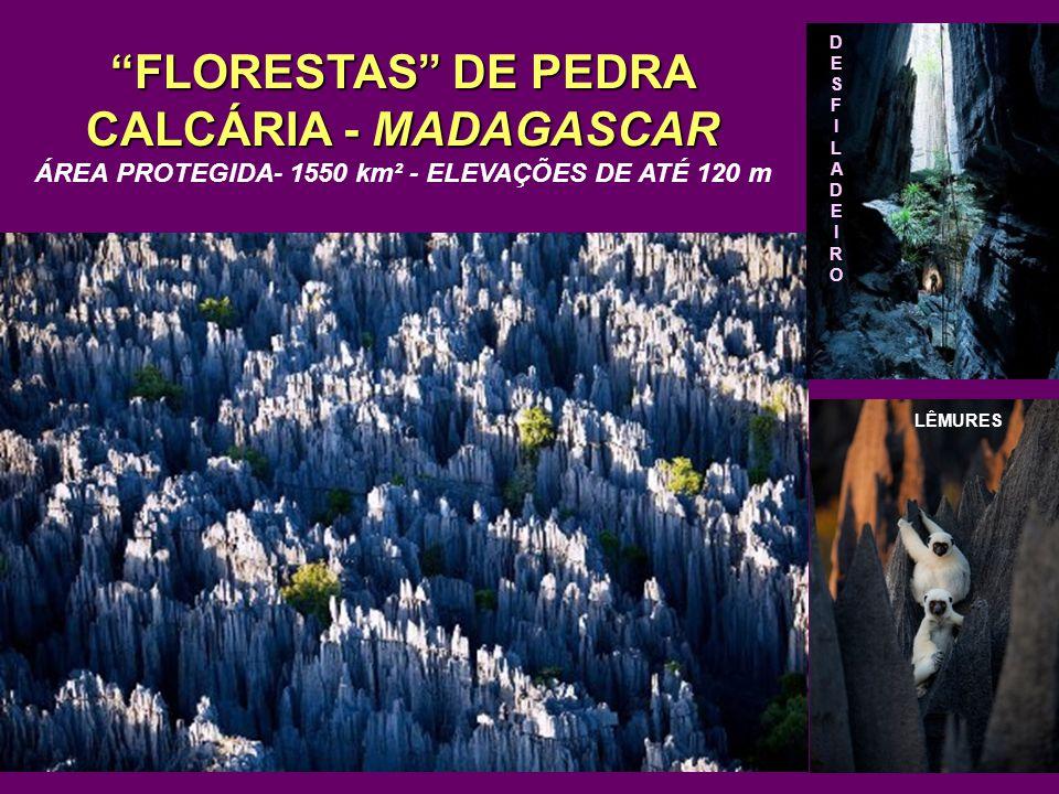 FLORESTAS DE PEDRA CALCÁRIA - MADAGASCAR ÁREA PROTEGIDA- 1550 km² - ELEVAÇÕES DE ATÉ 120 m