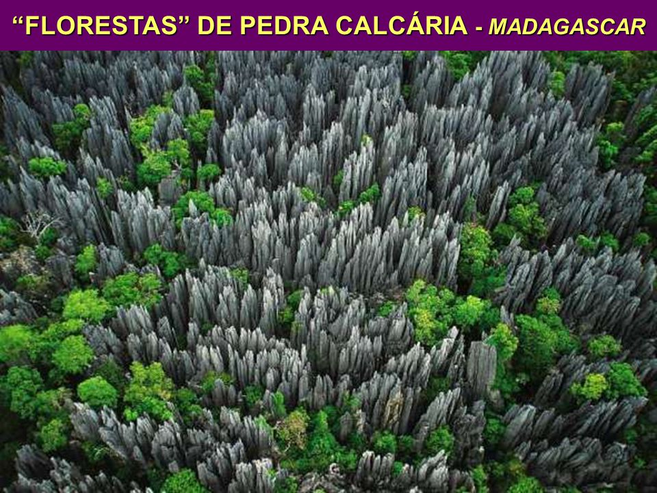 FLORESTAS DE PEDRA CALCÁRIA - MADAGASCAR