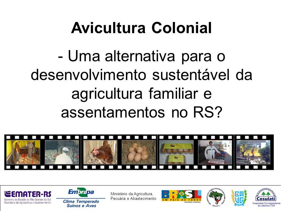 Avicultura Colonial - Uma alternativa para o desenvolvimento sustentável da agricultura familiar e assentamentos no RS