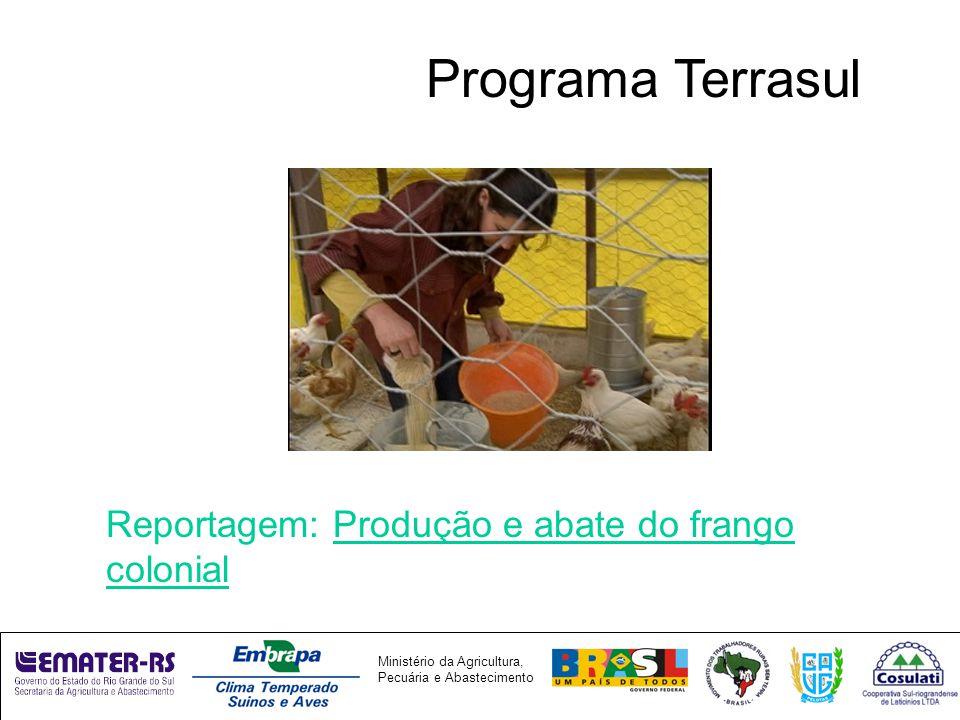 Programa Terrasul Reportagem: Produção e abate do frango colonial