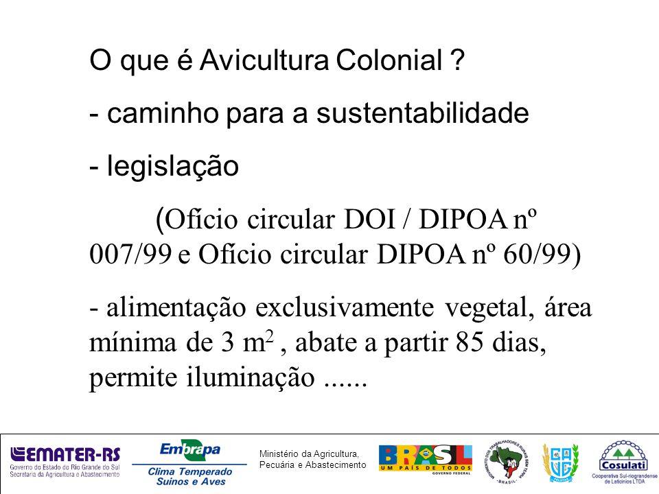 O que é Avicultura Colonial