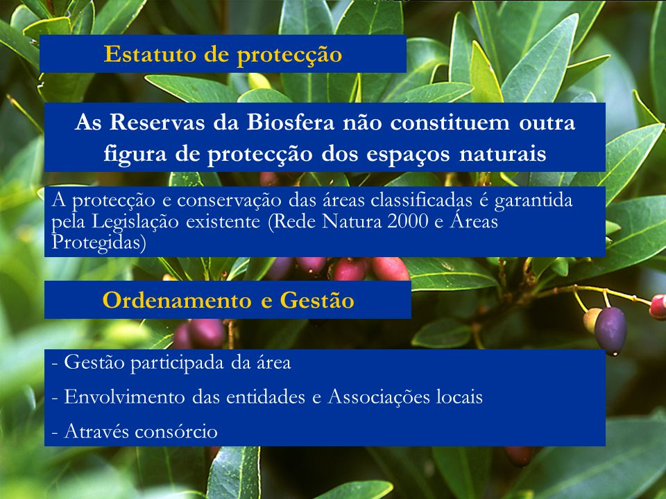 Estatuto de protecção As Reservas da Biosfera não constituem outra figura de protecção dos espaços naturais.