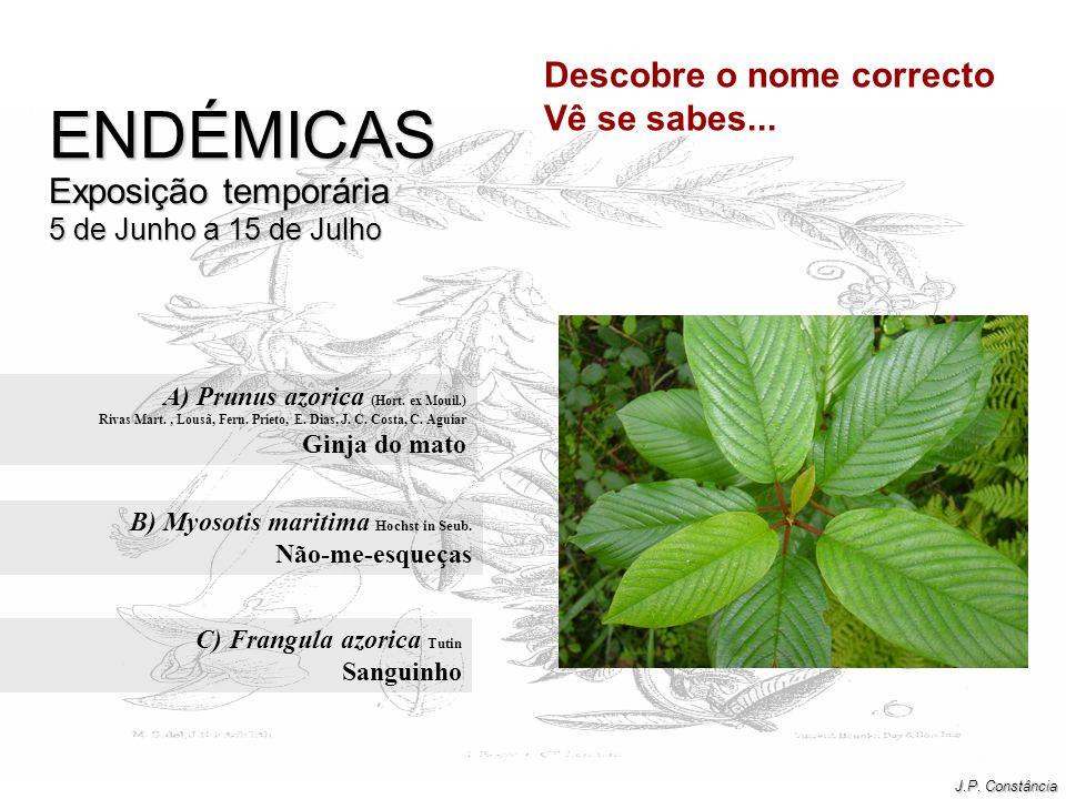 A) Prunus azorica (Hort. ex Mouil.) Ginja do mato