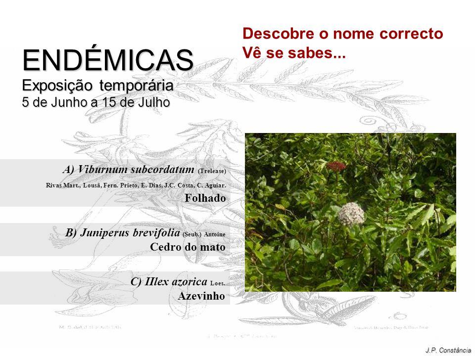 A) Viburnum subcordatum (Trelease) Folhado