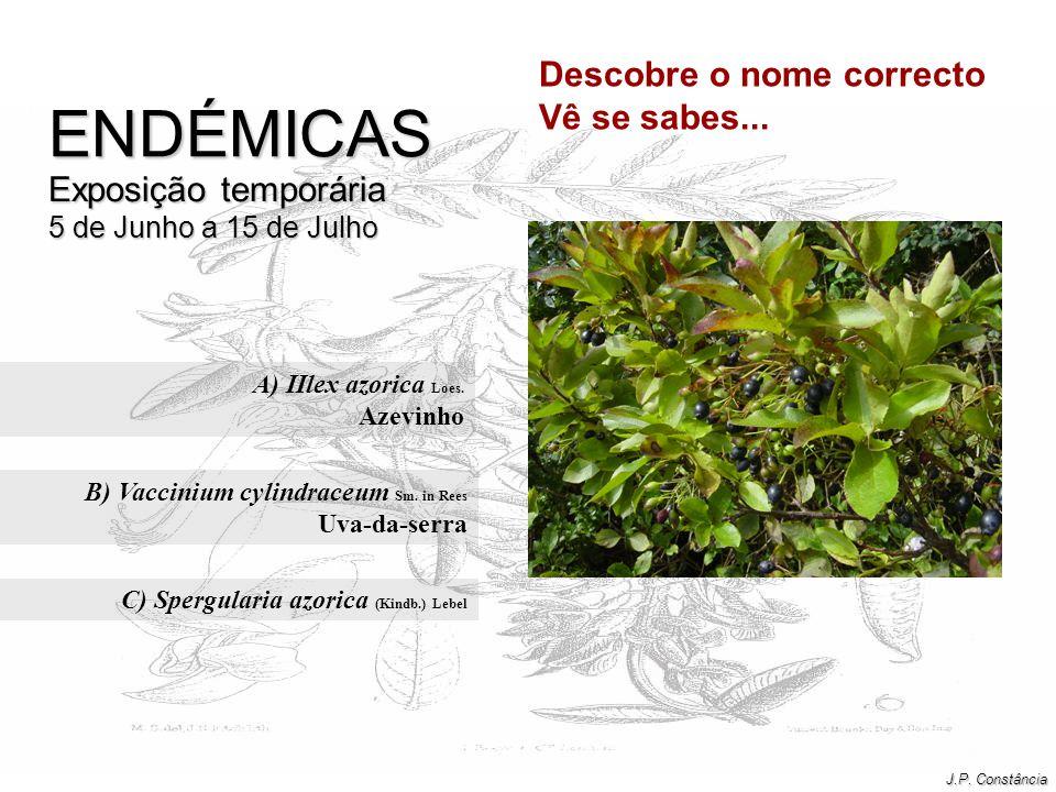 B) Vaccinium cylindraceum Sm. in Rees Uva-da-serra
