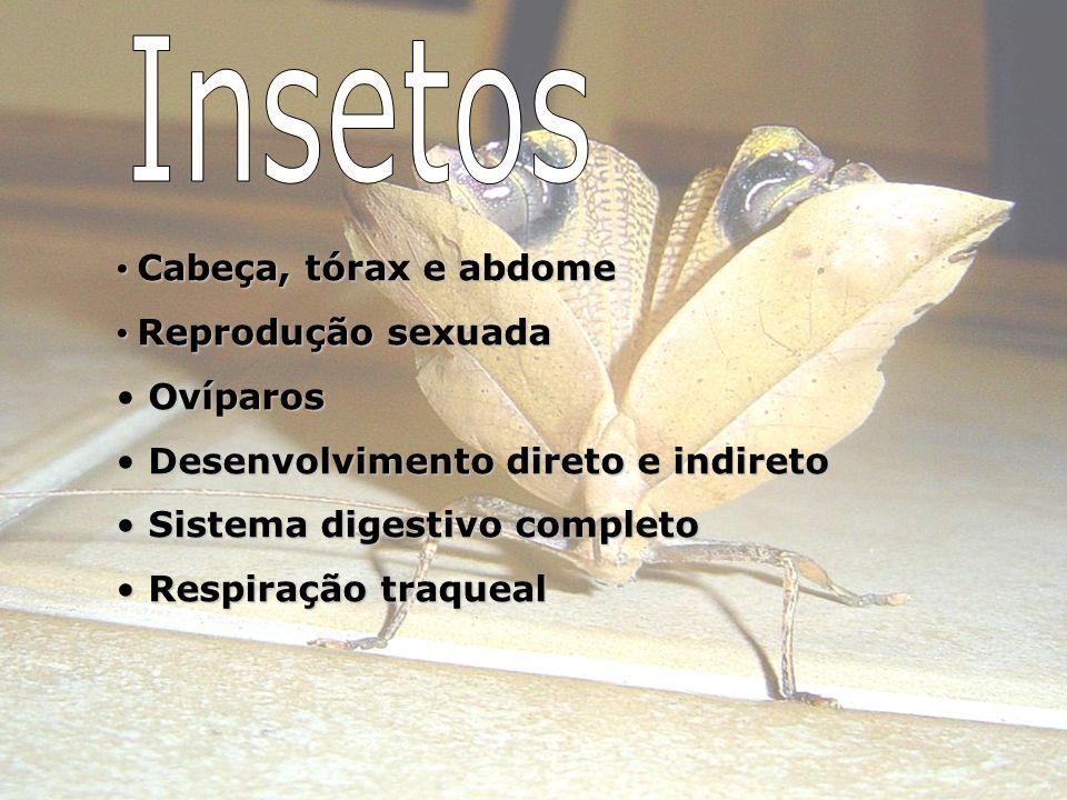 Insetos Cabeça, tórax e abdome Reprodução sexuada Ovíparos