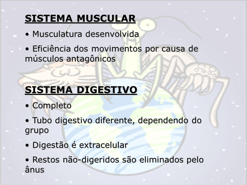 SISTEMA MUSCULAR SISTEMA DIGESTIVO Musculatura desenvolvida