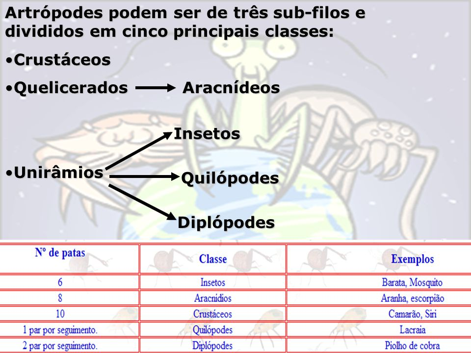 Artrópodes podem ser de três sub-filos e divididos em cinco principais classes:
