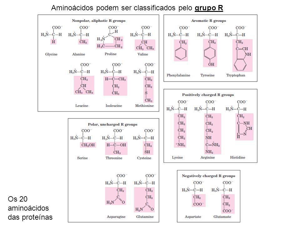 Aminoácidos podem ser classificados pelo grupo R