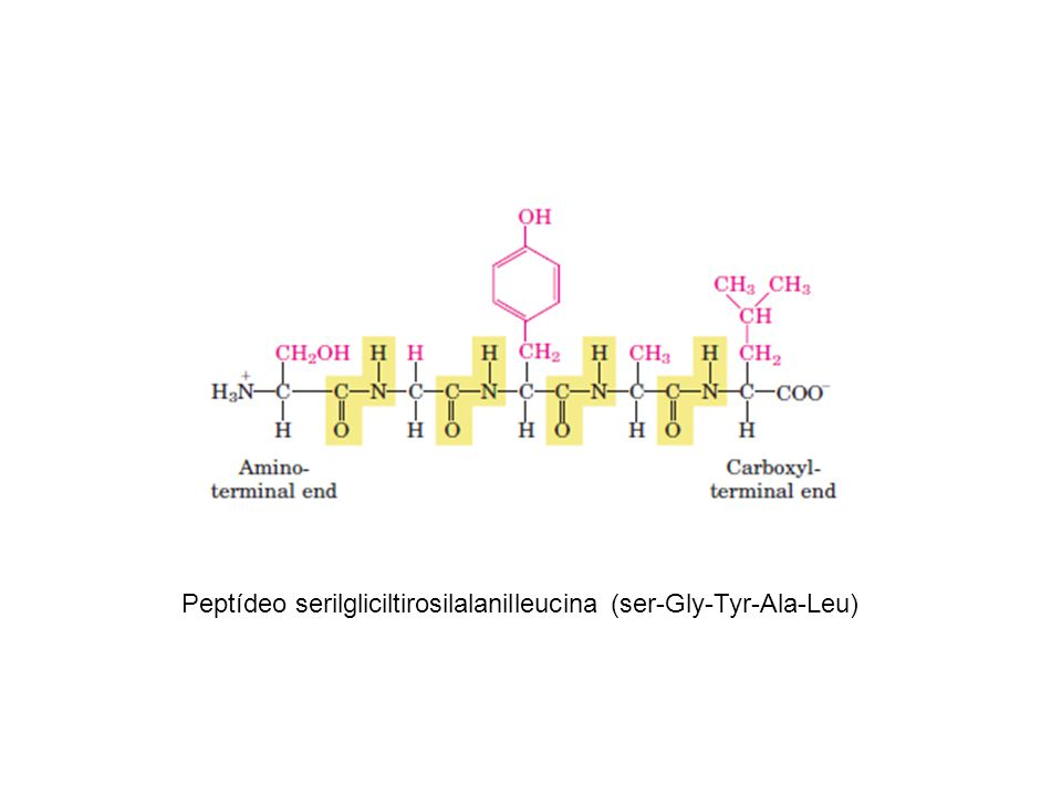 Peptídeo serilgliciltirosilalanilleucina (ser-Gly-Tyr-Ala-Leu)