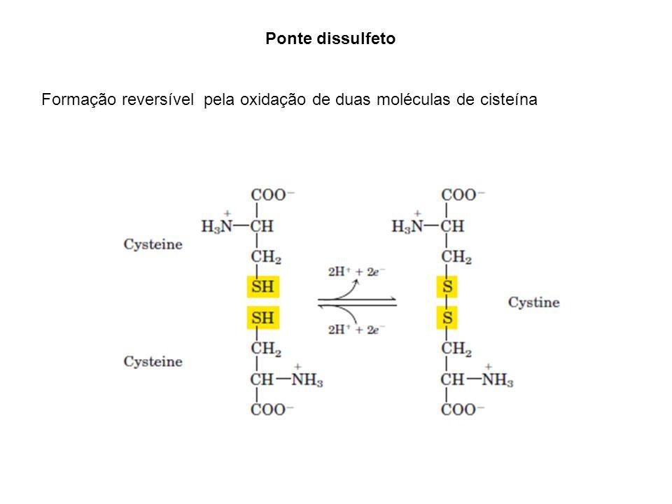 Ponte dissulfeto Formação reversível pela oxidação de duas moléculas de cisteína