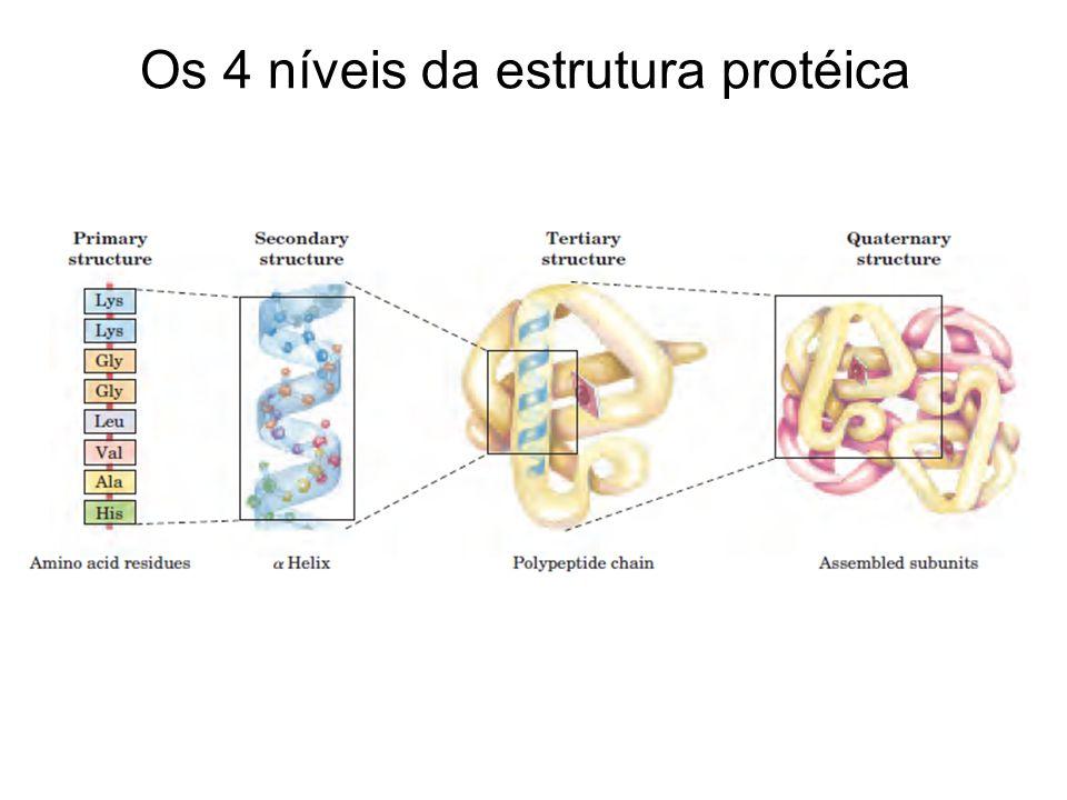 Os 4 níveis da estrutura protéica