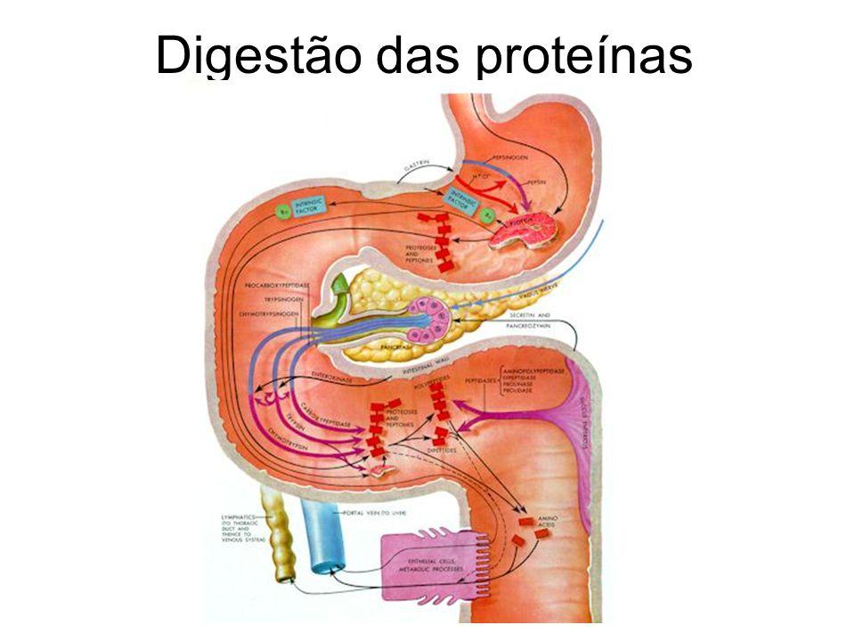 Digestão das proteínas