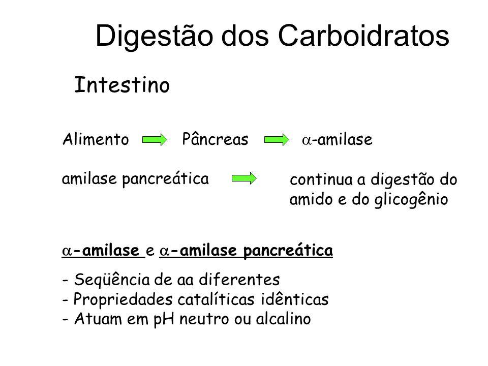 Digestão dos Carboidratos