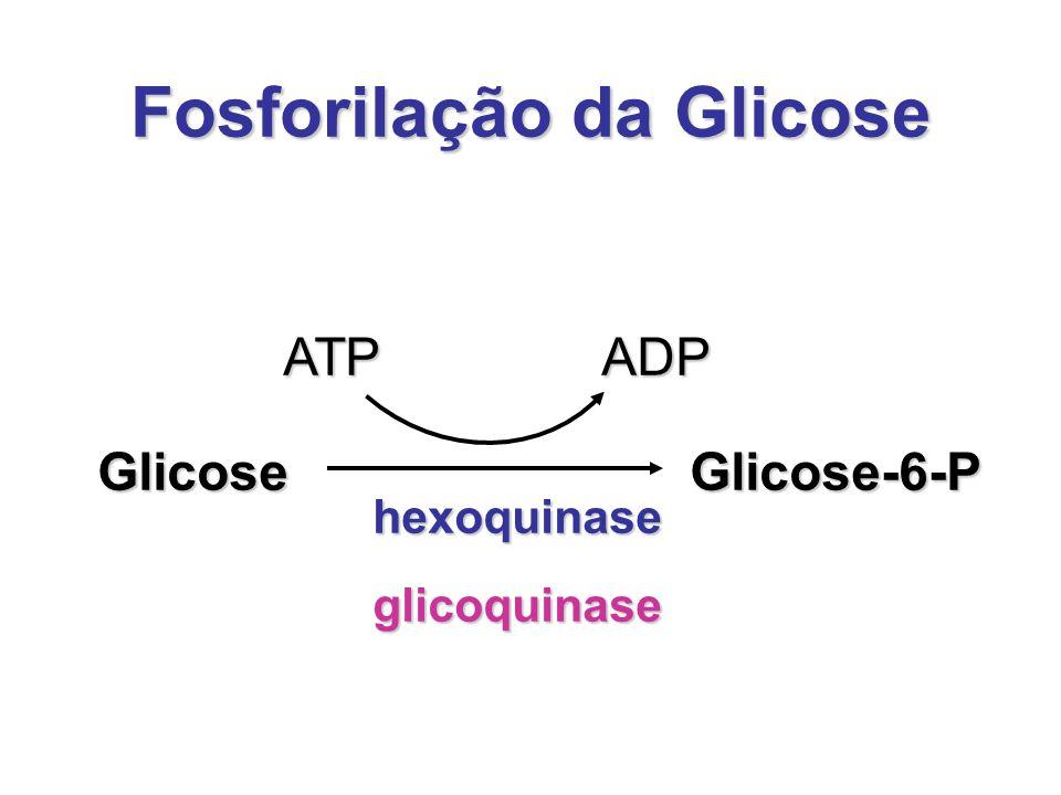 Fosforilação da Glicose