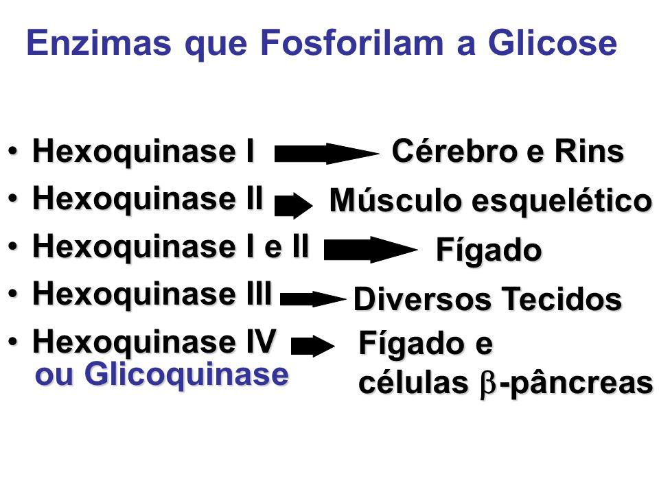 Enzimas que Fosforilam a Glicose