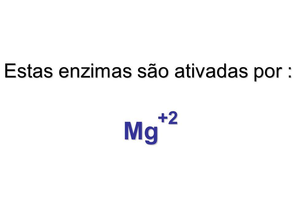 Estas enzimas são ativadas por :